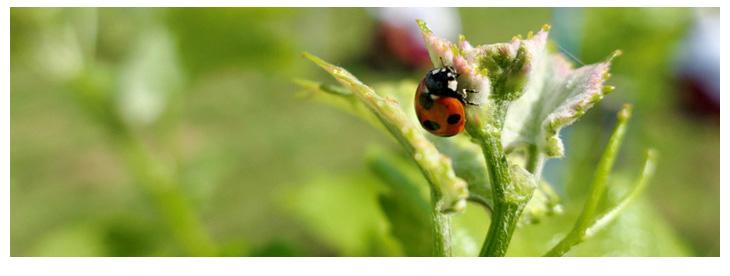 より自然な環境でのぶどう栽培
