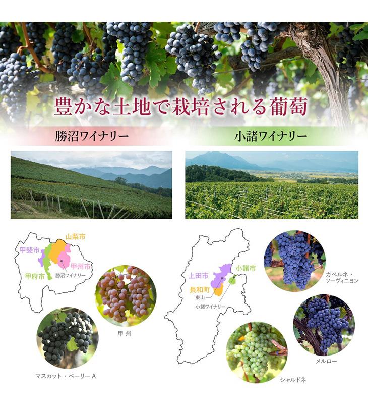 豊かな土地で栽培される葡萄